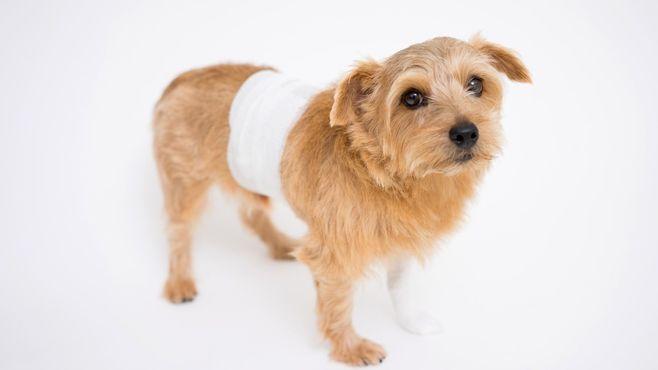 愛犬が交通事故に遭っても「物損」扱いのなぜ