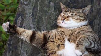 猫に本気で学びたい!「爆睡、快眠する」技術