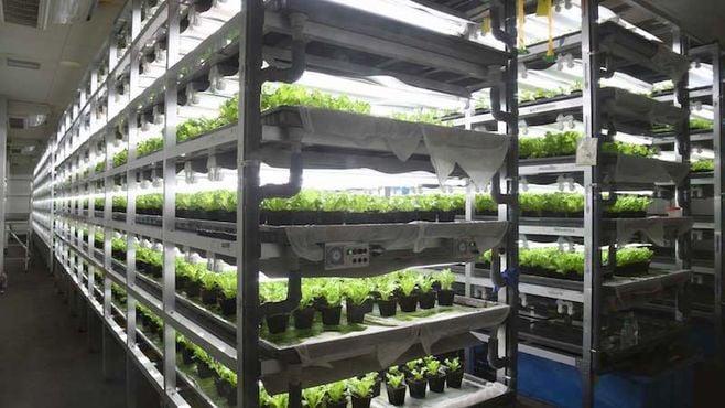関西私鉄が「野菜ビジネス」に参入する狙い