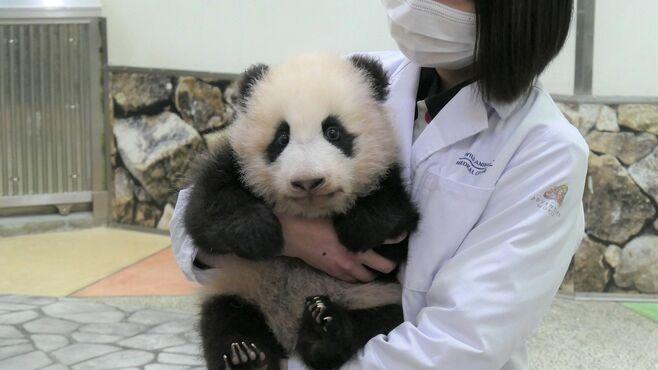 和歌山「赤ちゃんパンダ誕生」5つの異例な事情