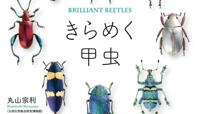 こんなにセクシー!「キラキラ甲虫」の秘密