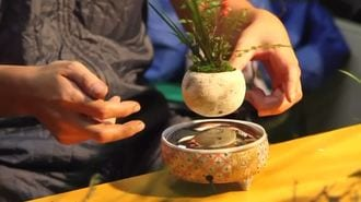 Bonsai Trees 'Float' Using Magnetic Levitation