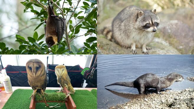 密輸コウモリも取引「ペット輸入大国」日本の闇