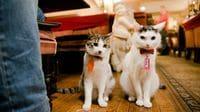 Public Cats of Tokyo: Cafe Arles, Shinjuku