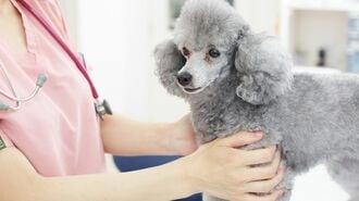 感染者の「ペット」を無償で預かるサービスとは