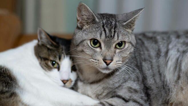 感染者の自殺率が上昇「猫の寄生虫」の怖い生態