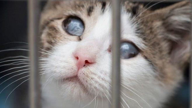 犬猫の「殺処分ゼロ」を目指す動物病院の挑戦