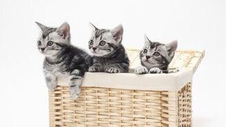 「猫に夢中な人」に見てほしい名作映画の魅力