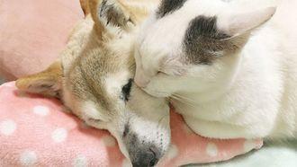 認知症を患う愛犬との介護生活のリアル