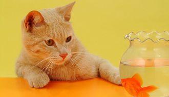 「猫は魚が好き」というイメージは誤解だった