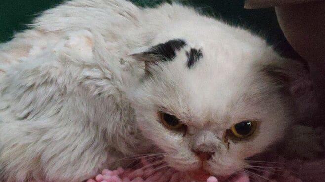 生活苦で「愛猫の餓死を考えた」飼い主の危うさ