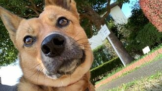 心を開かない「元野良犬」を迎えた家族の大決断