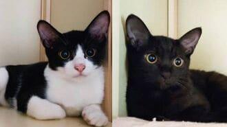 「猫カフェに子猫2匹を捨てた」飼い主の無慈悲
