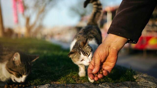 コロナの「ヒトから猫感染」どこまで気をつければいいのか?(写真:Kaan Sezer/iStock)