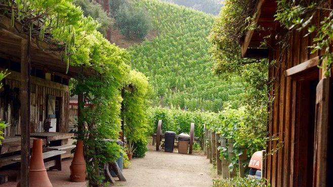 マードック所有のワイン農園は何がスゴイのか