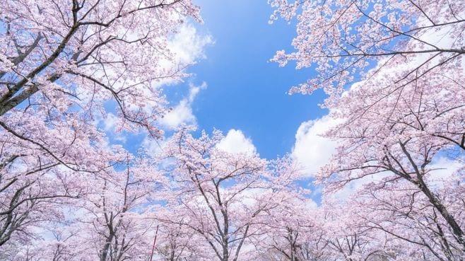 「日本株が3月中旬以降上昇する」と読む理由