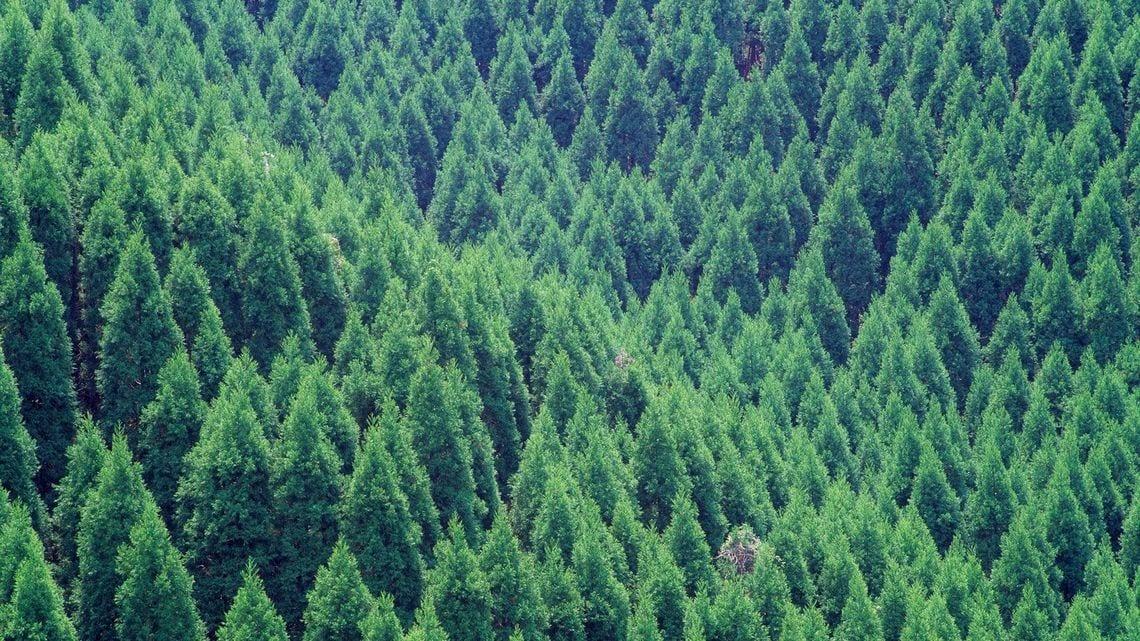 日本国民が払わされかねない林業...
