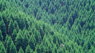 日本国民が払わされかねない林業政策のツケ