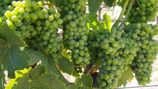 フランス高級ワインは日本で高値を崩せない