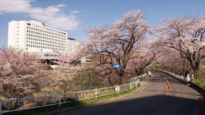 「東京化する」千葉大学よ、それでいいのか