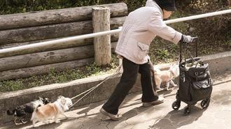 猫よりお勧め!「犬」がもたらす凄い健康効果