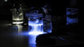 日本発の夢技術「人工光合成」はここまで来た