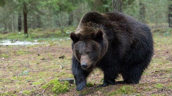 クマに襲われた人は、すべて自己責任なのか