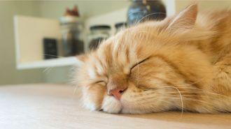 「睡眠負債」が招きかねない4つの致命的ミス