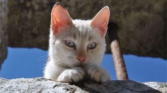 猫に学びたい!美味しく「ご馳走」になる技術