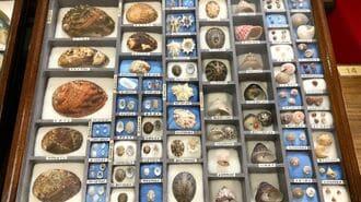 「1600種の貝殻集めに半生捧げた男」の驚き人生