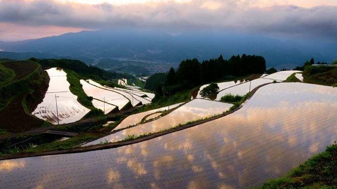 佐賀県「JAさが」、地域農協で初の持ち株化へ
