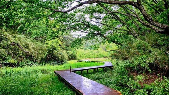 小網代の谷が「奇跡の自然」と呼ばれる理由