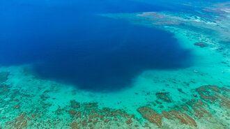 沖縄・西表島「野性が溢れる」世界遺産の島の日常