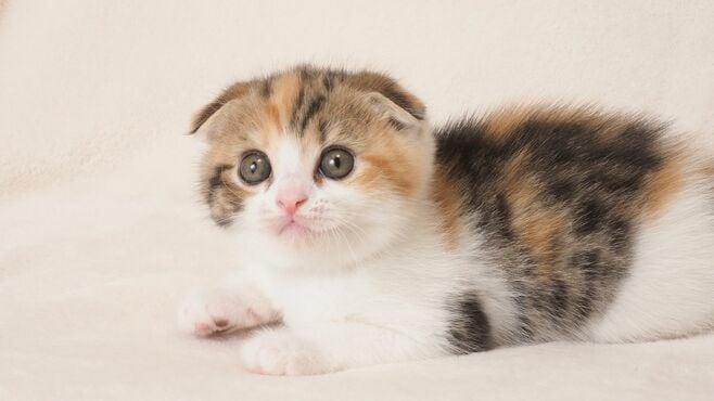 猫に「犬のようなしつけ」がどうにも難しい理由