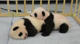 双子の名前発表はもうすぐ?「パンダ」の命名事情