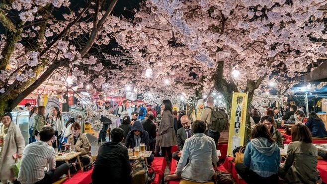 サクラに熱狂する日本人は外国人にはナゾだ