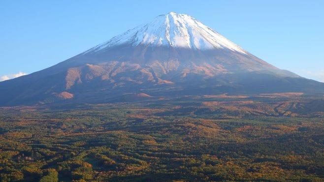 富士の樹海に伝わる「5つの都市伝説」の真実