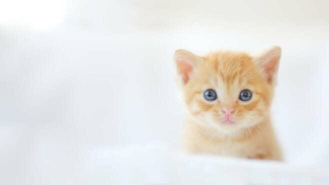 猫が自分の名前も飼い主の声もわかっている訳