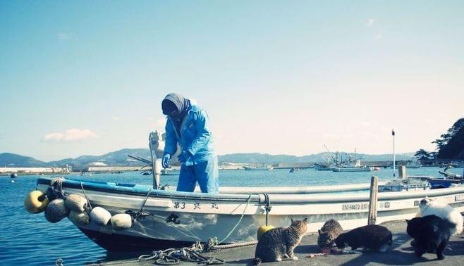 日本最北の「猫島」、田代島に行ってみた