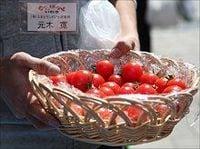 イトーヨーカ堂が「風評被害」のいわき産ハウストマト積極販売へ、16日から首都圏110店で開始