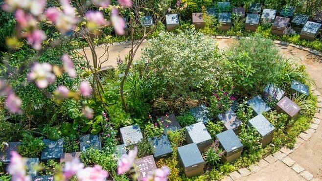 50万円で作れるお墓「樹木葬」が人気上昇のワケ