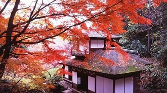 Where To Admire The Autumn Leaves in Tokyo