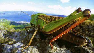 名カメラマンが語る昆虫映像の「リアル」