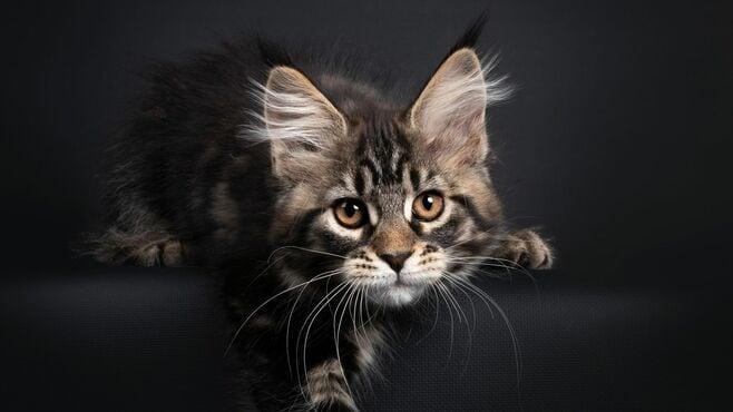 「36回ローンで購入された猫」の悲しすぎる結末