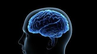 脳の仕組みを知れば一変!集中力を鍛えるコツ