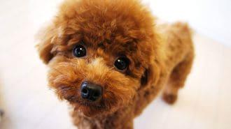 愛犬を「可哀想なワンちゃん」にしない食事法