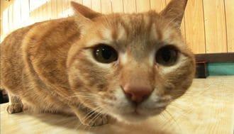 日本人が飼い猫につけたがる「あの名前」