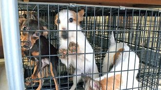 愛護団体が見た「子犬工場」の凄まじい実態