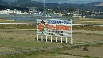 三ヶ日vs蒲郡、新幹線沿いの「みかんPR合戦」