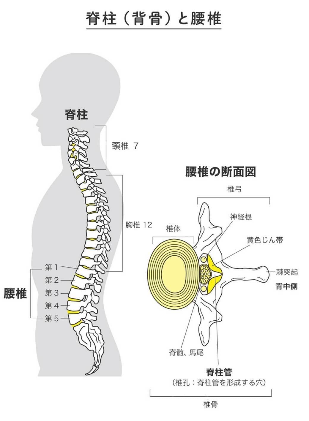 痛み 背中 ストレッチ の